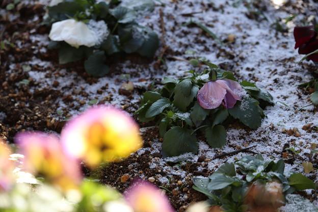 写真: 雪の朝