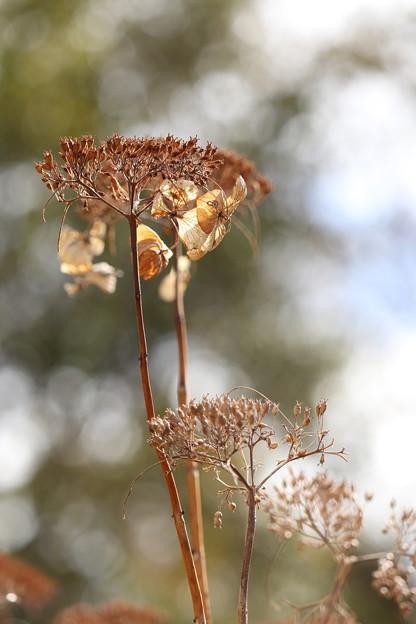 写真: 冬の華