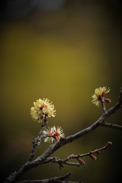 写真: 鎌倉黄金