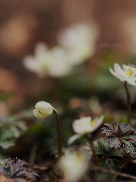 写真: 春ですよぉ