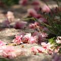 写真: 地にも花