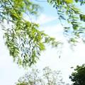 写真: 皐月の風