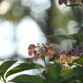 写真: 名残の花