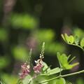 写真: 野に咲く花のように