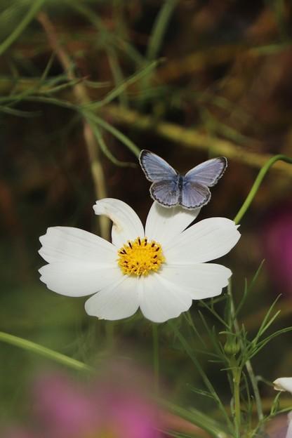 花に華を添えて