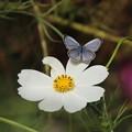 写真: 花に華を添えて