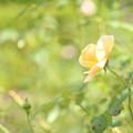 写真: 秋の陽 きらら
