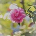 写真: 一番花