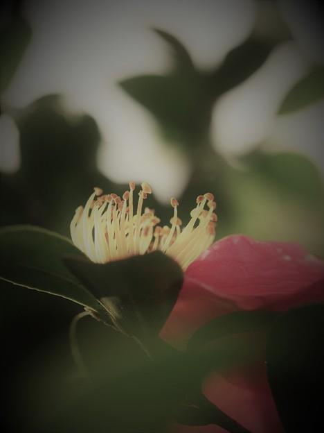 写真: 嘆きの蕊たち