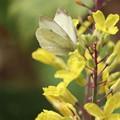 Photos: 花になって