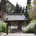 Photos: 六甲の春