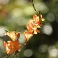 Photos: あなたの花 咲きました