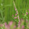 Photos: 野の花を あなたに