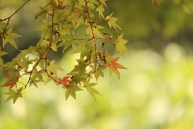 Photos: 秋初め