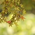写真: 秋初め