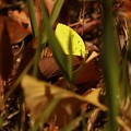 Photos: 葉っぱじゃないのよ わたし。。。