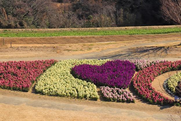 Photos: 花の淡路から 愛を込めて