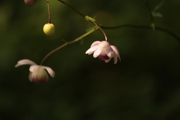 Photos: 花 灯る