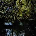 写真: 16_奥宮の鳥居-3817