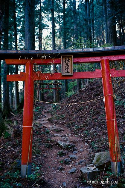 写真: 秋葉神社_1の鳥居_film-010021