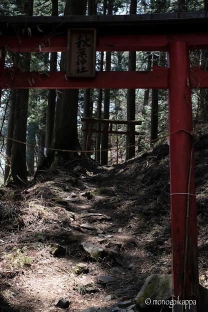 写真: 秋葉神社_1の鳥居-4027