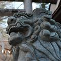 写真: 伊香保_狛犬-4111