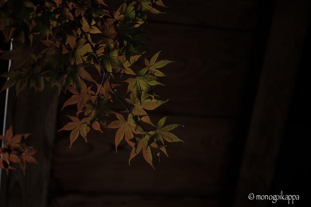 写真: 小川寺_紅葉-4252