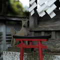 写真: 小川寺_お稲荷さん-4265