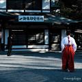 写真: 巫女-2916