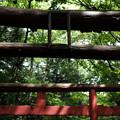 写真: 加護丸稲荷-08_四の鳥居と五の鳥居-5608