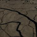 写真: 地割れ?-7638