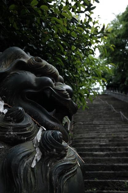 写真: 愛宕神社_狛犬-4132