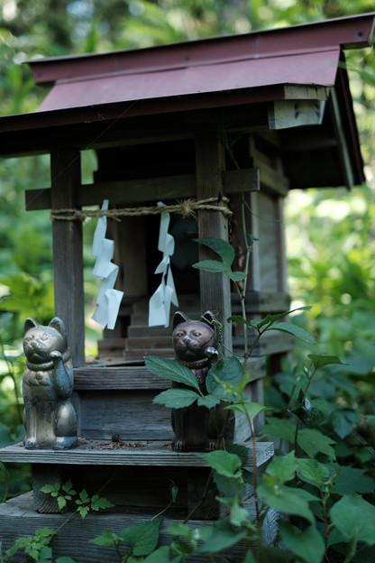 写真: 上之台稲荷神社_招き猫-7915