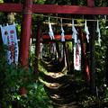写真: 上之台稲荷神社-7890