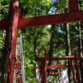 写真: 上之台稲荷神社-7892
