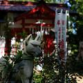 写真: 上之台稲荷神社-7907