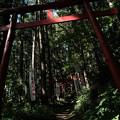 写真: 上之台稲荷神社-7924