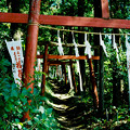 写真: minoltacl_上之台稲荷神社_鳥居-000028