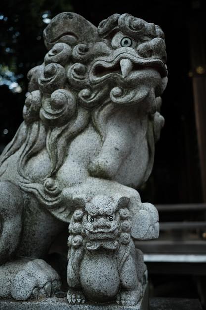 滝の城_06主郭_城山神社_狛犬-8219