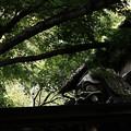 写真: 深大寺_鬼太郎茶屋-8308
