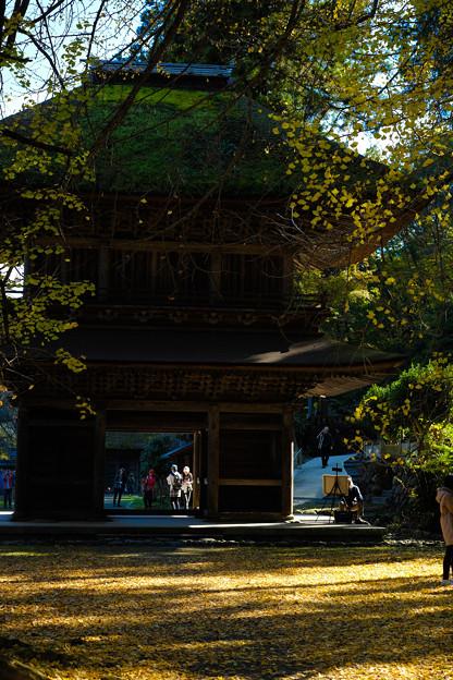 Photos: 広徳寺_黄葉-8679