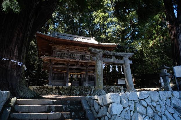 武田八幡宮-8860