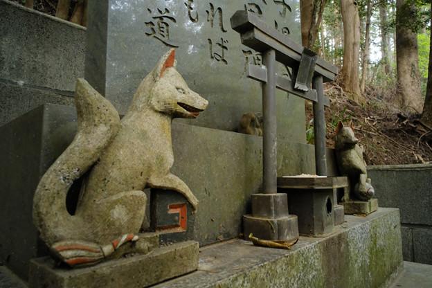 朝日稲荷神社_18石碑の狐-9212