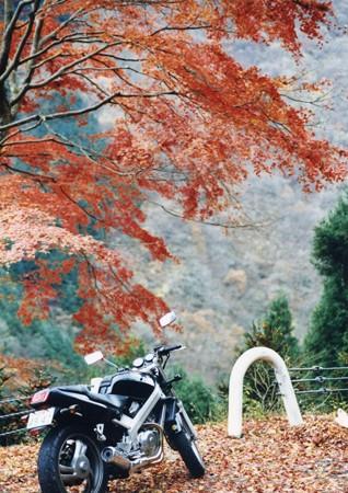 bike03_BROS650