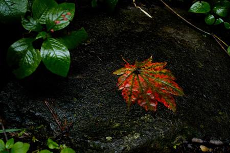 瀧尾神社_紅葉-9919