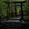瀧尾神社_運試しの鳥居-9929