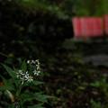 瀧尾神社_可憐な花-9951