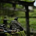 瀧尾神社_子種石-9964