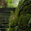 Photos: 瀧尾神社_苔むす石垣-9925