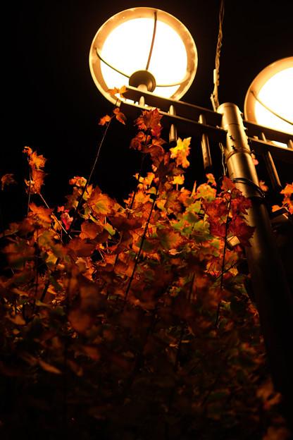 Photos: 夜の高山-0464